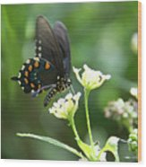 Butterfly 140 Wood Print