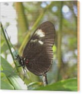 Butterfly-2 Wood Print