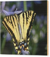 Butterfly - 2 Wood Print