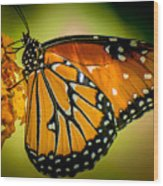 Butterfly 29 Wood Print