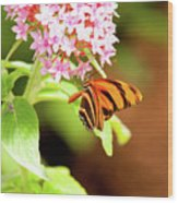 Butterfly-4 Wood Print