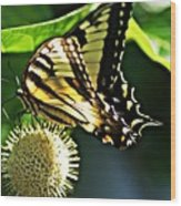 Butterfly 4 Wood Print