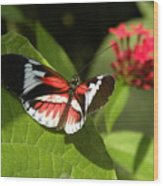 Butterfly-5 Wood Print