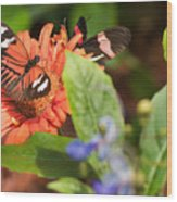 Butterfly 6 Wood Print