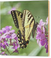 Butterfly #9 Wood Print