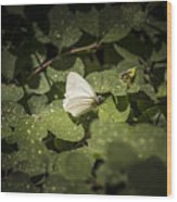 Butterfly 9 Wood Print