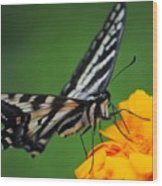 Butterfly Afternoon Wood Print