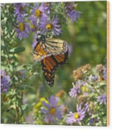 Butterfly And Blue Wood Print
