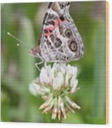 Butterfly And Bugs On Clover Wood Print