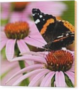 Butterfly And Cone Flowers Wood Print