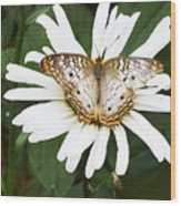 Butterfly And Flower Wood Print
