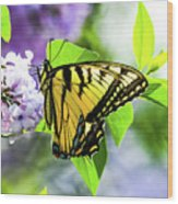 Butterfly And Lilacs Wood Print