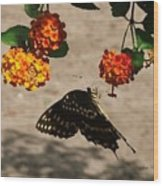 Butterfly And Nature Wood Print
