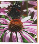 Butterfly And Pink Cone Flower Wood Print