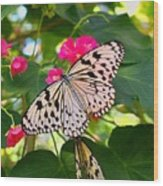 Butterfly And Pink Flower Wood Print