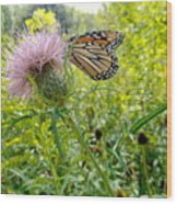 Butterfly And Pink Wildflower Wood Print