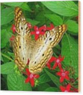 Butterfly And Red Star Sprig Wood Print