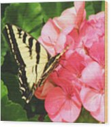 Butterfly And The Geranium Wood Print