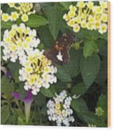 Butterfly And The Spider Wood Print