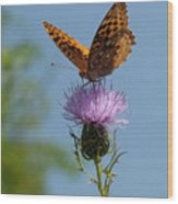 Butterfly And Thistle 1 Wood Print
