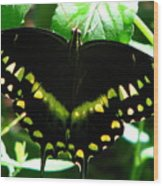 Butterfly Art 3 Wood Print