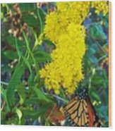 Butterfly At Cape May Nj Wood Print