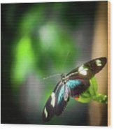 Butterfly At Cleveland Botanical Gardens Wood Print