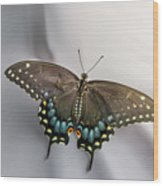 Butterfly At Picnic Wood Print