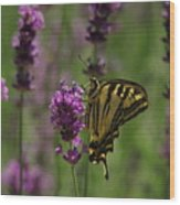 Butterfly Balancing Act Wood Print
