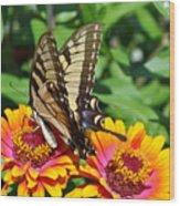 Butterfly Beauty II Wood Print