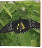 Butterfly Black And Yellow Wood Print