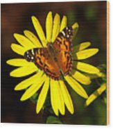 Butterfly Bloom Wood Print