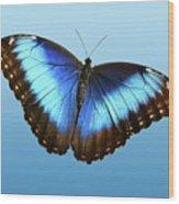 Blue Morpho Beauty Wood Print