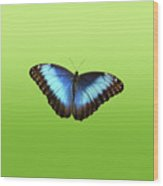 Butterfly Blue Morpho On Green Wood Print