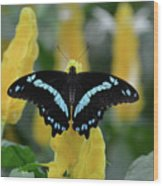 Butterfly Blue Striped Wood Print