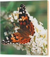 Butterfly Bush Wood Print