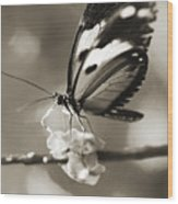 Butterfly Close-up Wood Print