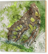 Butterfly Close Up Digital Watercolor On Photograph Wood Print