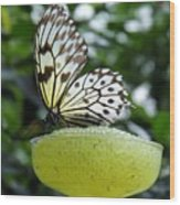 Butterfly Cocktail Time Wood Print
