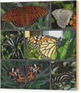Butterfly Collage 2  Wood Print by April Wietrecki Green
