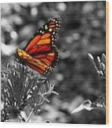 Butterfly Color On Black And White Wood Print