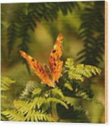Butterfly Comma Wood Print