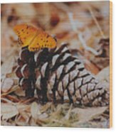 Butterfly Cone Wood Print