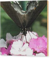 Butterfly Cup Wood Print