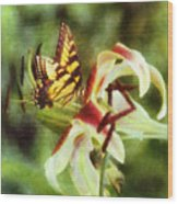 Butterfly Daylily Wood Print