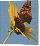 Butterfly Dining Wood Print