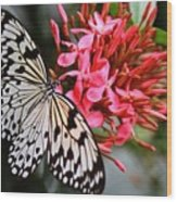 Butterfly Enchantment Wood Print