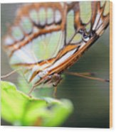 Butterfly Face Wood Print
