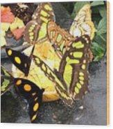 Butterfly Feast  Wood Print