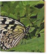 Butterfly Fresco Wood Print